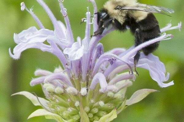 Karen Bussolini, a garden photographer, speaker, writer, NOFA-Accredited Organic Land Care Professional and eco-friendly garden coach, will present Planting the Year-Round Pollinator Garden, Jan. 28 at 2 p.m. at Kent Town Hall. Her photography is shown above.
