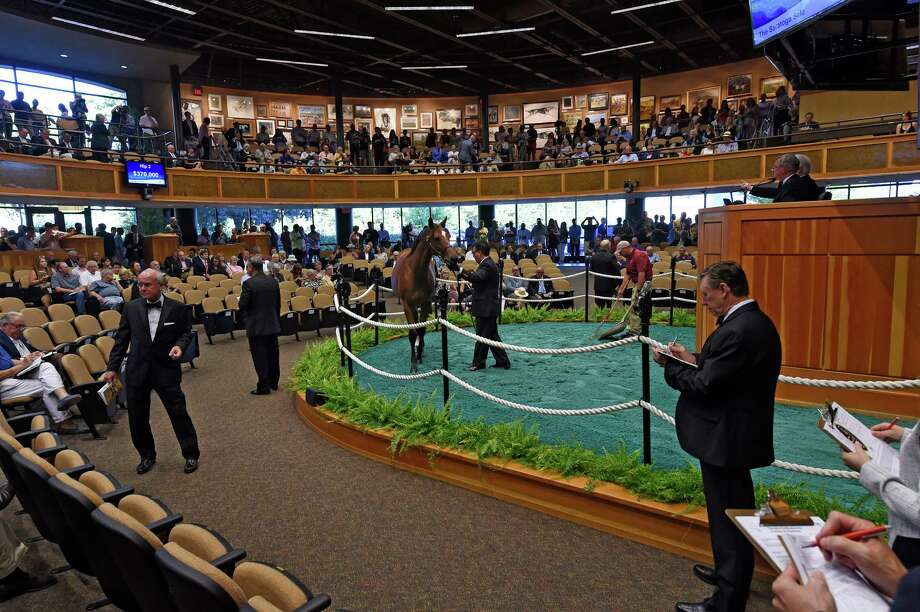 The Fasig-Tipton Yearling Sales have started their first evening of the 2016 season on Monday, Aug. 8, 2016, in Saratoga Springs, N.Y. (Skip Dickstein/Times Union archive) Photo: SKIP DICKSTEIN