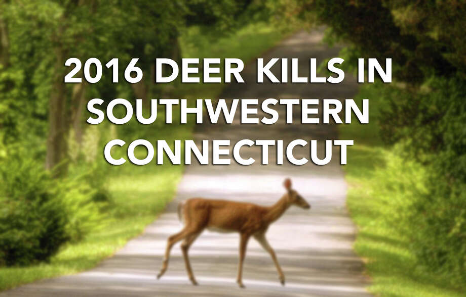 Hunters harvested more than 10,500 deer in the 2016 hunting season, a more than 1,400 increase from the previous year, according to the state Department of Energy and Environmental Protection. Two Fairfield County towns - Newtown and Ridgefield - made the top 10 list of deer kills, along with New Milford in Litchefield County. Bow hunting accounted for nearly half of the 10,570 of deer havested with more than a third killed on private property, according to the data from Sept. 15, 2016 - Jan. 17, 2017. Photo: Photo: Paul Desmarais