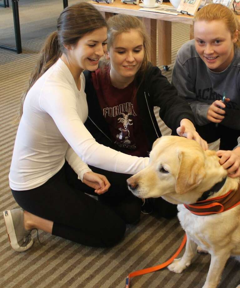 Sophie Ackerman, Quincy Cole and Lily MacDonald enjoy taking time with Lily the therapy dog at Wilton Library during last years midterm exam week. Photo: Contributed Photo /