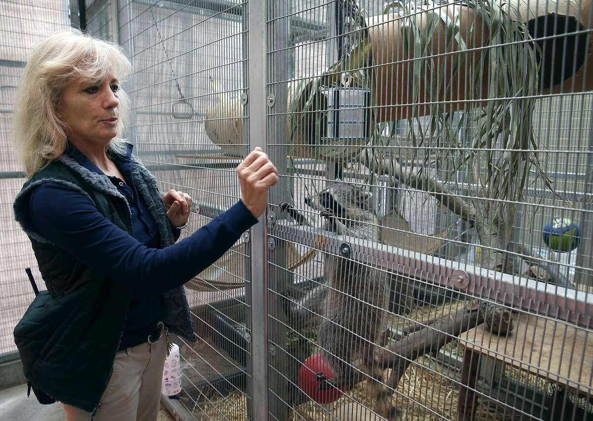 Dr. Karen Emanuelson tends to young raccoons quarantined at the Oakland Zoo Veterinary Hospital.