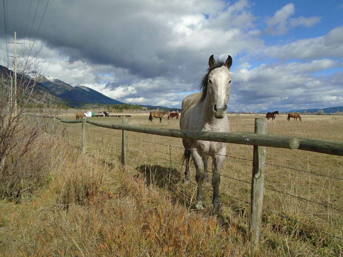 Friendly horses are among the views between Jackson and the entrance to Grand Teton National Park.