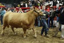 Tristan Himes from Sterling City takes the top prize with his Charolais steer, Nugget, chosen by judges as the 2016 Grand Champion at the San Antonio Stock Show & Rodeo. For 2016, junior livestock auction sales totaled more than $6.1 million at the San Antonio event. That was just part of the $11.3 million Texas youth took home last year in the form of scholarships, grants, endowments and livestock and art auction proceeds.