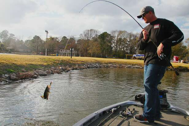 Keith Combs swings aboard a Lake Conroe largemouth that hit a crankbait while Combs, one of the nation's top tournament bass anglers, was practicing this past week for 2017 Bassmaster Classic set for the Houston-area reservoir this March.