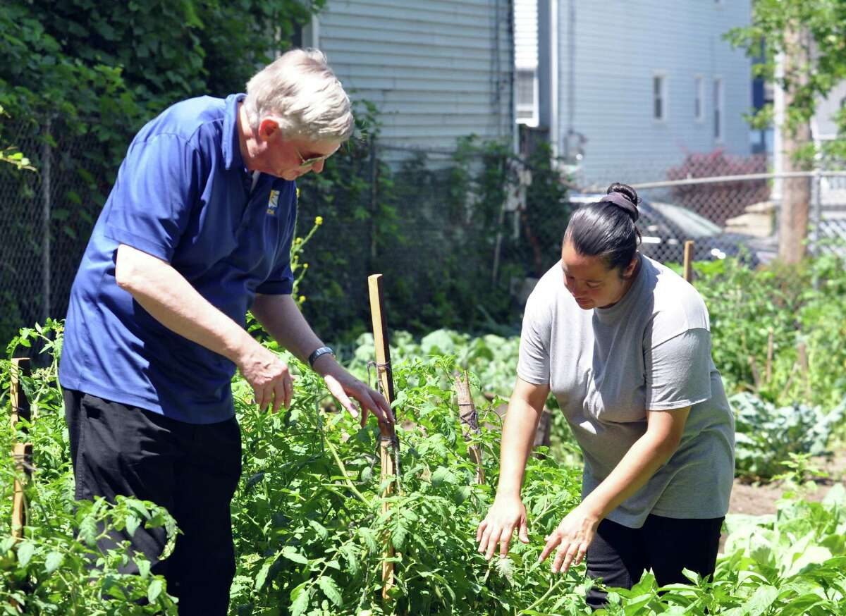 Iva Gay, master gardener and coordinator, right, shows Reverend Phillip Grigsby, left, the tomatoes and peppers growing at the Schenectady Inner City Ministry Community Garden on Wednesday, July 27, 2016 in Schenectady, N.Y. This garden is for residents in and around the Hamilton Hill neighborhood. (Eliza Mineaux/Special to the Times Union)