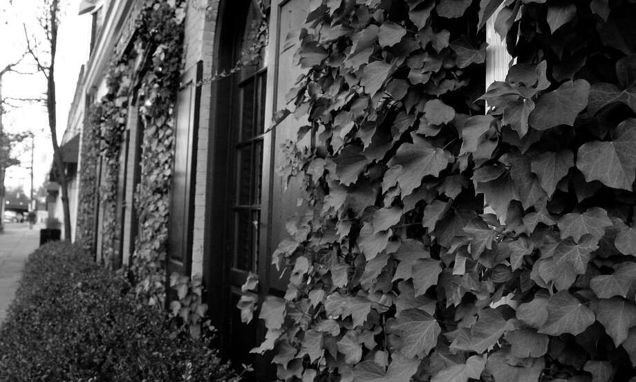 Ivy creeping up the sides of a building in downtown Darien. Photo: Erin Kayata / Hearst Connecticut Media / Darien News