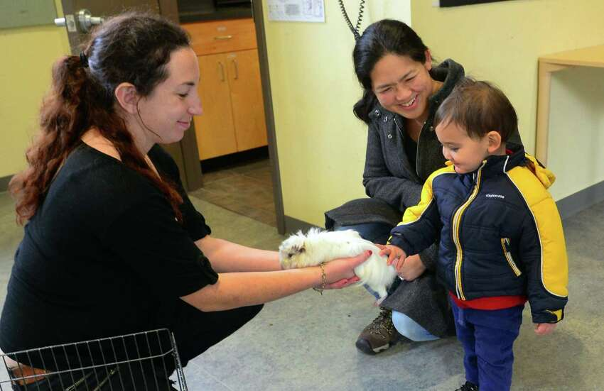 Earthplace's Lara Briehl, left, show Puff the guinea pig to Leo Freedman, 2, of Fairfield, as his mom Susie Wu looks on during the center's Winterfest Celebration at the center in Westport, Conn., on Saturday Jan. 21, 2017. Children made pinecone birdfeeders, played with insta-snow, built mini ice sculptures, and many more amazing winter crafts. Indoor activities included exploring crystals under a microscope and hourly visits with various animals in the center's auditorium. Families were able to hike trails throughout the woods around the center and a campfire and hot chocolate greeted visitors as well.
