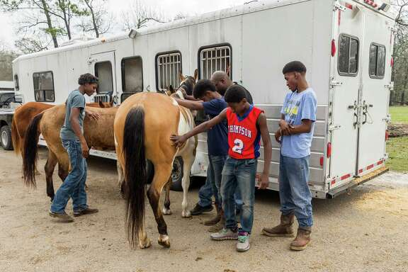 January 21, 2017:   Members of The Original OTC (Oklahoma Texas Connection) trail riding group, inspect their horses at Bruno's Triangle 7 Arena in Houston, Texas.  (Leslie Plaza Johnson/Freelance)