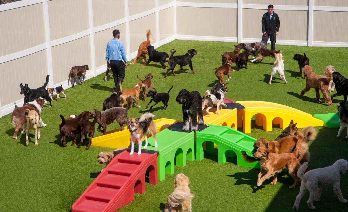 K9 Resorts, Daycare & Luxury Hotels wants to bring its franchise of dog hotels to Houston. (Contributed photo)