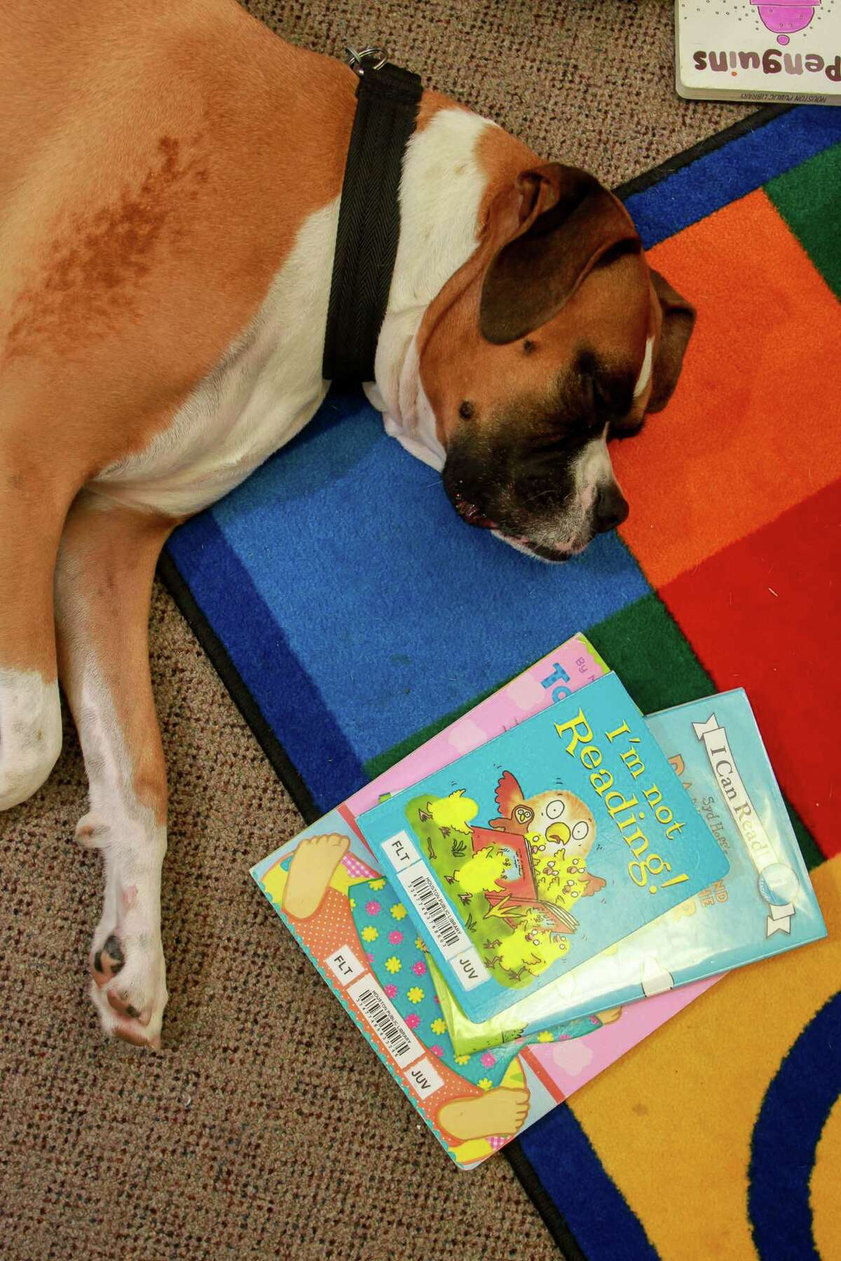 Baker, the boxer owned by Judith Moore, rests at the Houston Public Library, George B. Meyer, Sr. Branch. Baker was part of a group of trained therapy dogs at the library to ease reading discomforts and encourage children in reading.