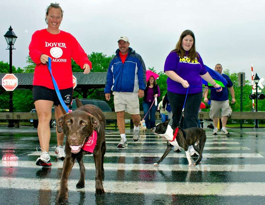 SPECTRUM/Max, a 3-year-old chocolate Labrador retriever from the Lab Rescue shelter shows Jen Fisher of New Milford the way across rain-soaked Railroad Street May 8, 2010 during the Animal Welfare Society's 10th annual walk-a-thon in New Milford. Trailing Jen and Max are Frank Smith and Heather Daniels of New Milford with Charlie, a 4-year-old Boston terrier from the New Milford shelter. Photo: Trish Haldin / The News-Times Freelance
