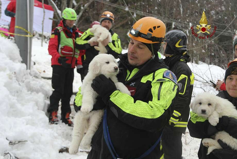 Rescuers hold puppies found alive in the rubble of a hotel buried by an avalanche in Farindola, Italy. Photo: Associated Press