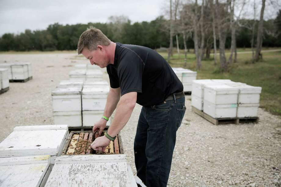 Randy Verhoek checks one of his beehives waiting to be moved to California. Photo: Elizabeth Conley, Houston Chronicle / © 2017 Houston Chronicle