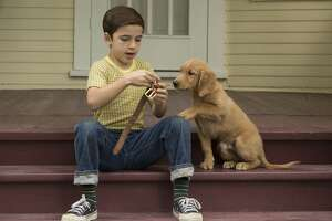 "This image released by Universal studios shows Bryce Gheisar in a scene from ""A Dog's Purpose."" (Joe Lederer/Universal Studios via AP)"