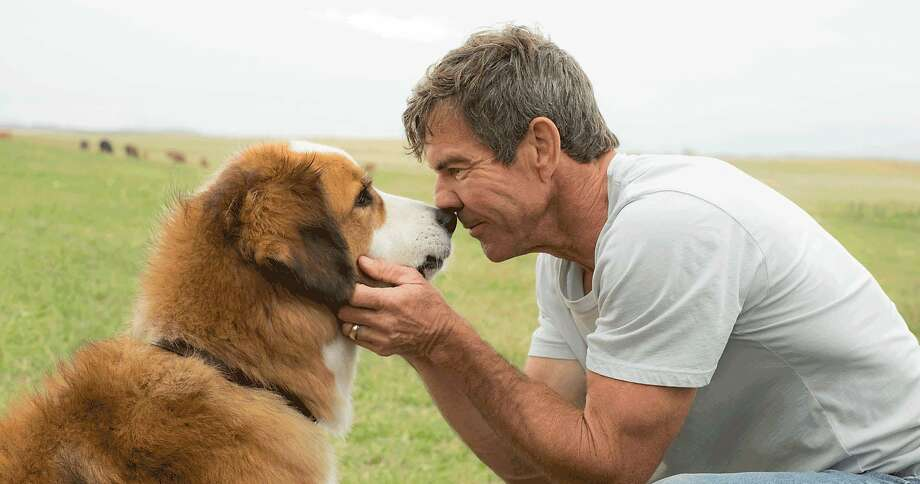 "Dennis Quaid is Ethan in ""A Dog's Purpose,"" whose release was overshadowed by controversy over a video from the set. Photo: Universal Pictures, TNS"