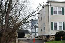 A tree was blown onto a house located on Cove Rd. in Stamford, Conn. on Monday, Jan. 23, 2017.