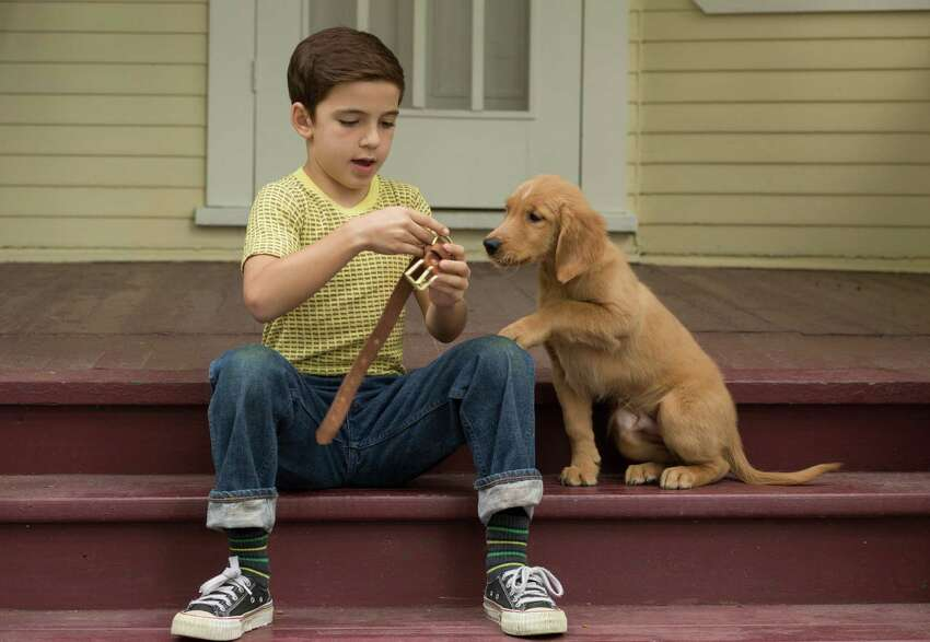 Do you want to see a dog movie? In this sentimental offering,