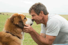 "Houston native Dennis Quaid stars in ""A Dog's Purpose."""