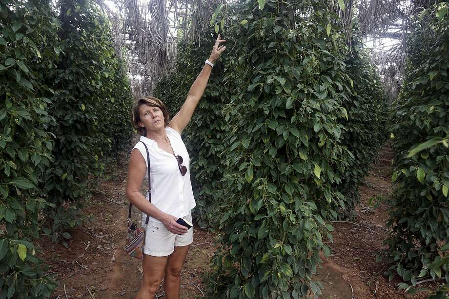 Nathalie Chaboche stood last year amongst her crop of peppers in Kampot. Lauded by celebrity chefs, exorbitantly priced, Cambodia's Kampot pepper is enjoying a renaissance. Photo: Denis Gray, Associated Press