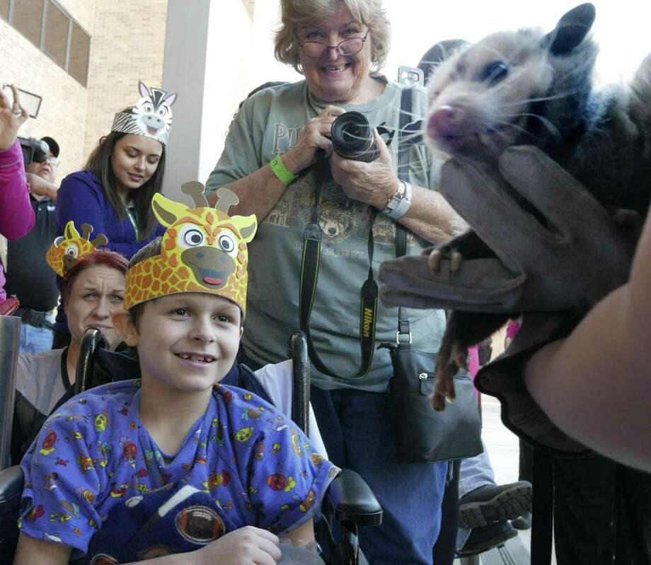 Ricky Smith, 10, a patient at University Hospital, watches a Virginia opossum at University Hospital on Tuesday, Jan. 24, 2017. Animals, including a sloth and a ferret, were included as part of a new program called San Diego Zoo Kids which includes a closed-circuit television channel. Programming on the channel will target children in pediatric wards and is funded by philanthropist T. Denny Sanford, who has partnered with the private nonprofit National University and the San Diego and San Antonio Zoos. Photo: Billy Calzada, Staff / San Antonio Express-News