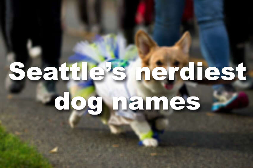 From sports nerds to political nerds to sci fi nerds, we've christened our pooches with our greatest passions. Check out our favorite nerdy dog names.