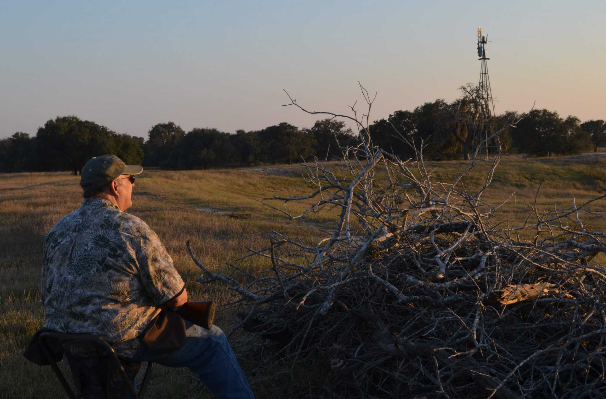 Texas hunters experience hit-or-miss dove action