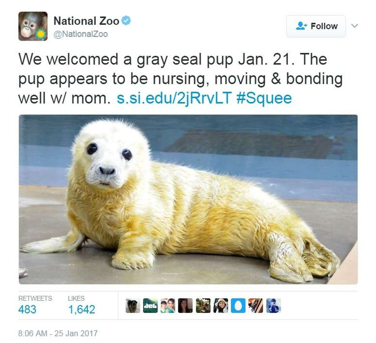 The animal tweet that launched more than 1,000 likes - the National Zoo tweet of its gray seal pup for #CuteAnimalTweetOff.