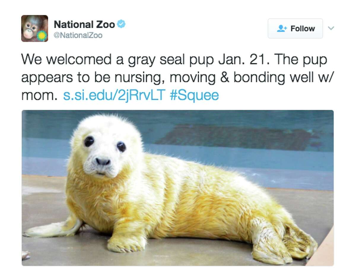 It all started with this gray seal pup from the National Zoo in Washington D.C. Twitter