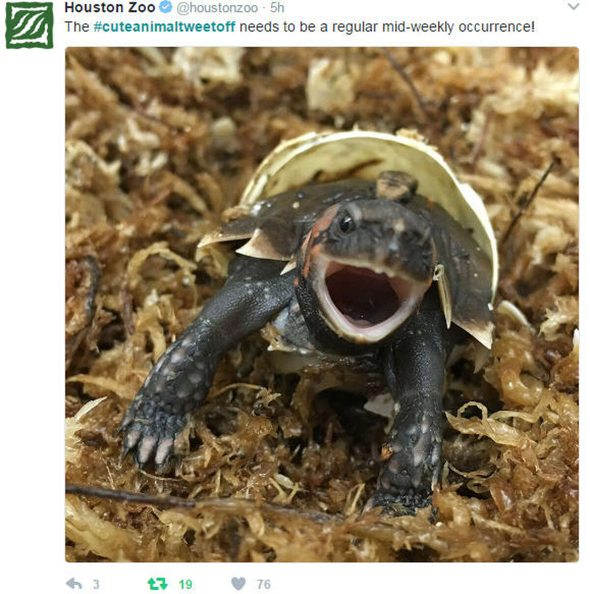 PHOTOS: Zoos around the country show off their cutest animals A handful of zoos and aquariums around the country began a battle of sorts, tweeting out photos of their cutest animals. Photo: The Houston Zoo Click through for images of some of the cutest animals in America...