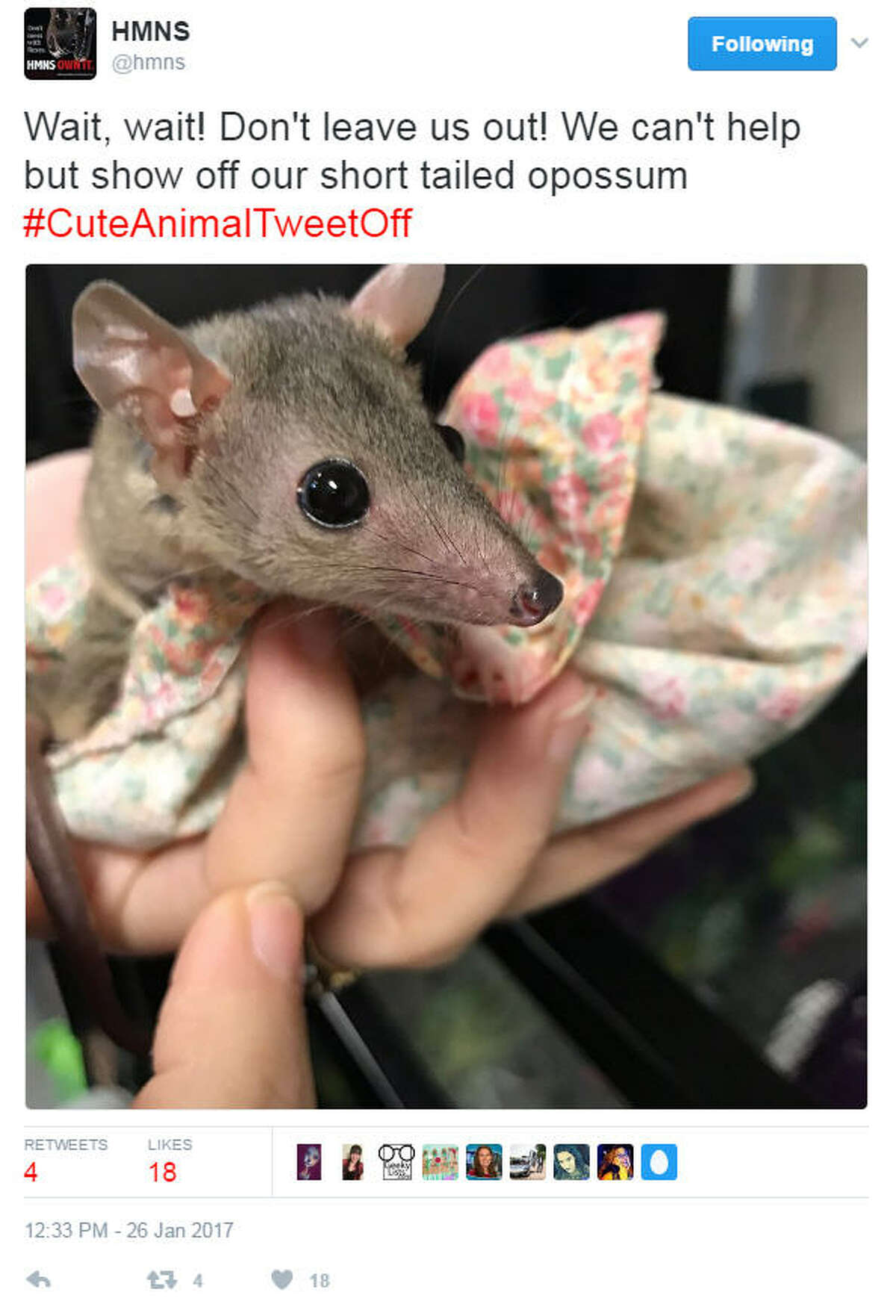 A handful of zoos and aquariums around the country began a battle of sorts, tweeting out photos of their cutest animals. Photo: Houston Museum of Natural Science