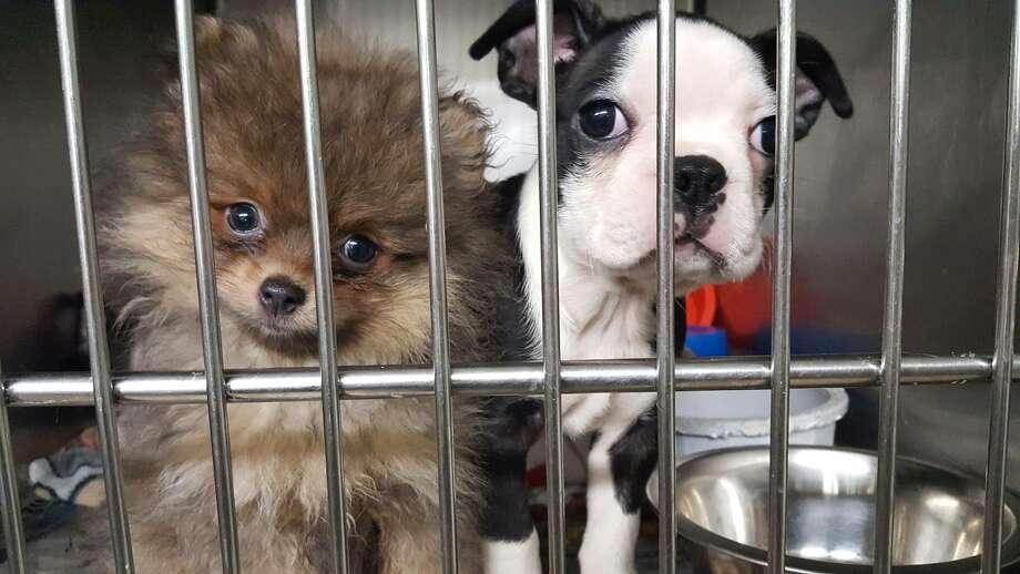 Van Crash in New York Nearly Kills More Than 100 Puppies