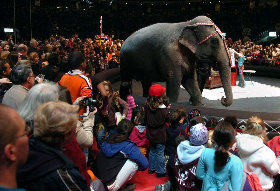 Ringling Brothers Barnum and Bailey Circus has decided to fold its tent and retire what had been a hugely popular show. But do not despair, circus fans. A reader says that, with the Donald Trump inauguration, a new circus has arrived. Photo: File Photo /Christian Abraham /File Photo / Connecticut Post file photo