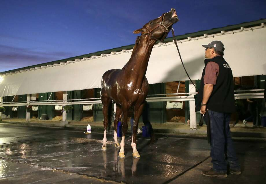 California Chrome is bathed following a workout in preparation for the inaugural running of the $12 million Pegasus World Cup horse race at Gulfstream Park, Friday, Jan. 27, 2017, in Hallandale Beach, Fla. California Chrome will run his final career race Saturday in the Pegasus World Cup. (AP Photo/Lynne Sladky) Photo: Lynne Sladky, Associated Press