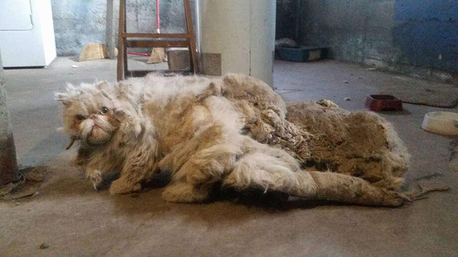 Sinbad in the basement where he was found. Photo: Anti-Cruelty Society/Courtesy