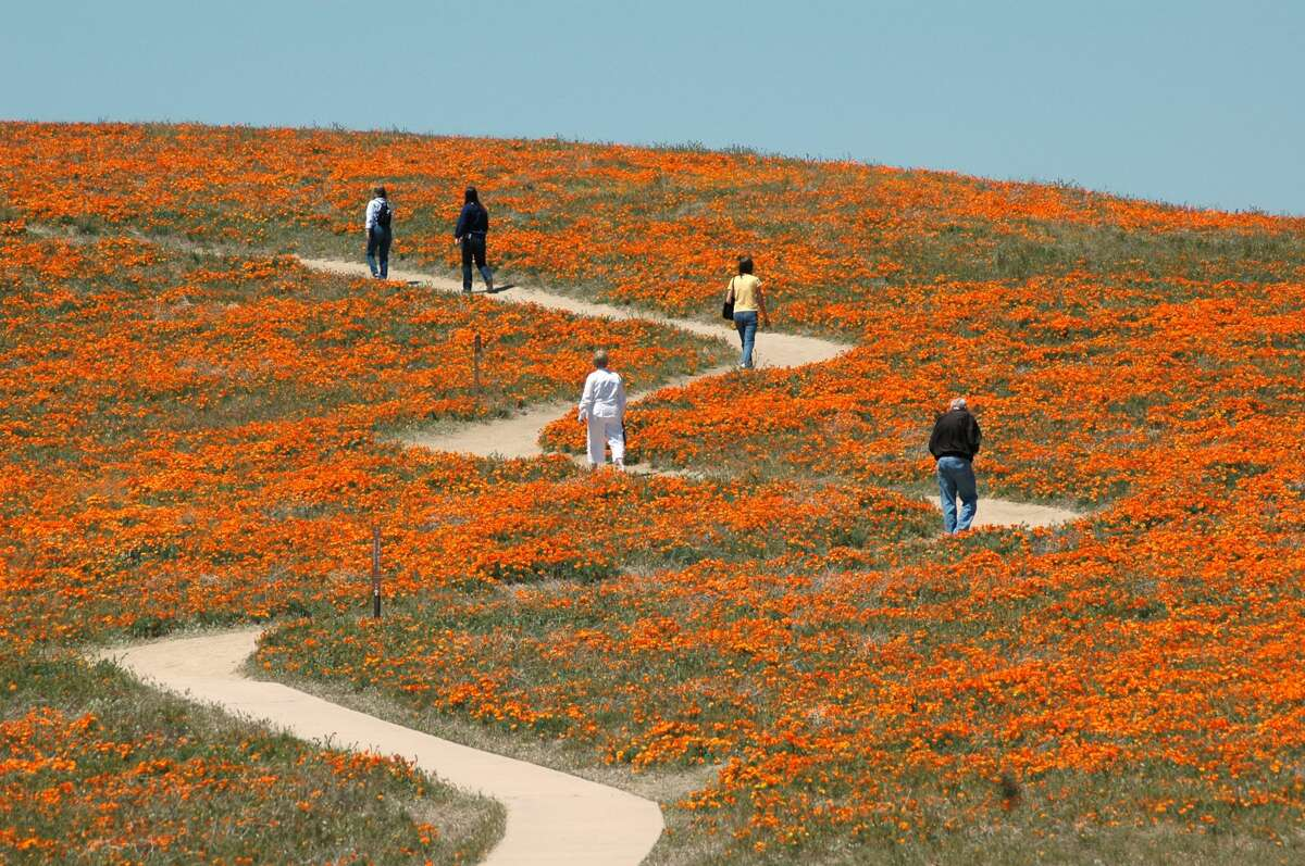 Visitors hike up the Tehachapi Vista trail, at the Antelope Valley California Poppy Reserve, Wednesday, April 16, 2008, during the height of the blooming season.