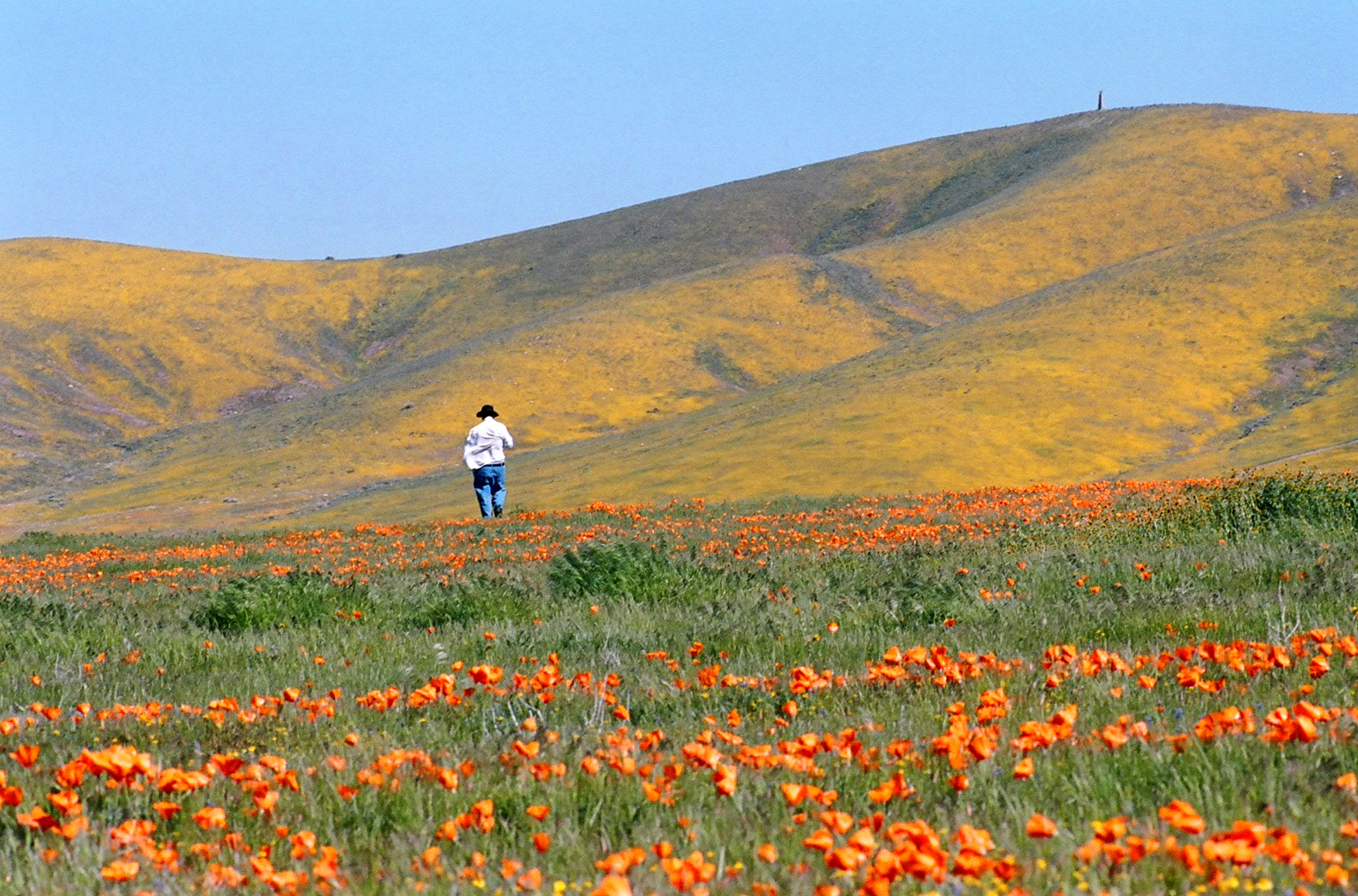 California Is About To Explode With A Spectacular Wildflower Display