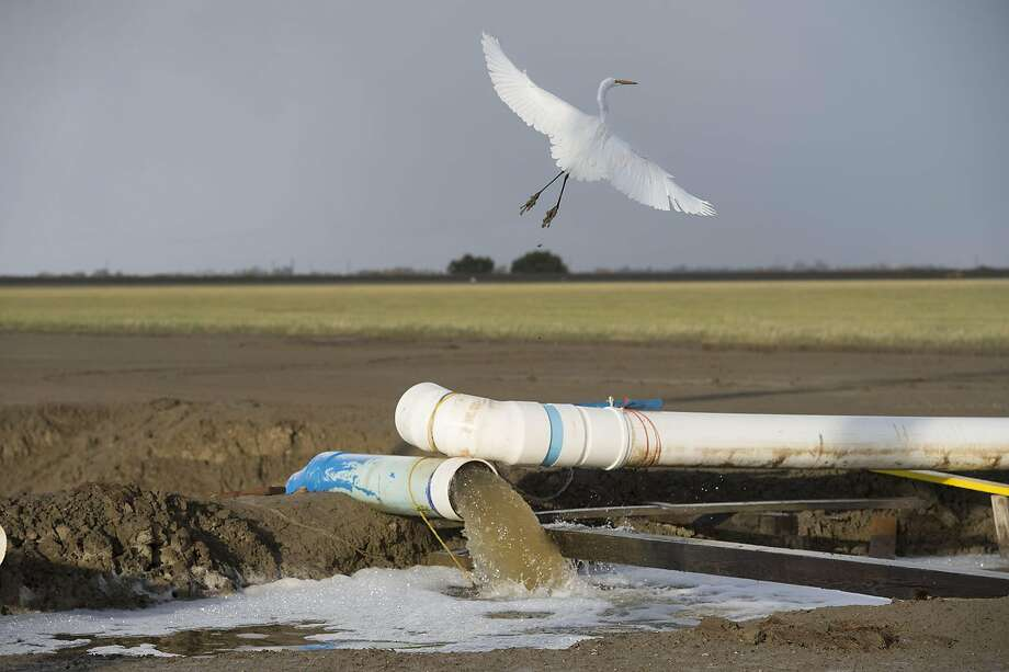 An egret flies over a canal where the Panoche Water and Drainage District is reusing drainage water to keep farmland alive on Nov. 9, 2015, in Firebaugh, Calif. (Randy Pench/Sacramento Bee/TNS) Photo: Randy Pench, McClatchy-Tribune News Service