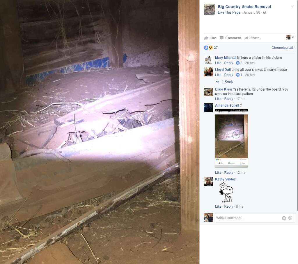 photos north texas family u0027s home overrun by 24 rattlesnakes one