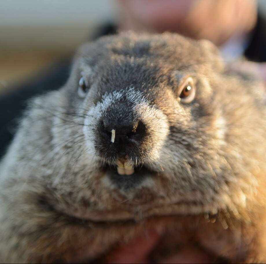 Pictures of a ground hog Hog Trap - Detailed Plans - Wilcox Web Works