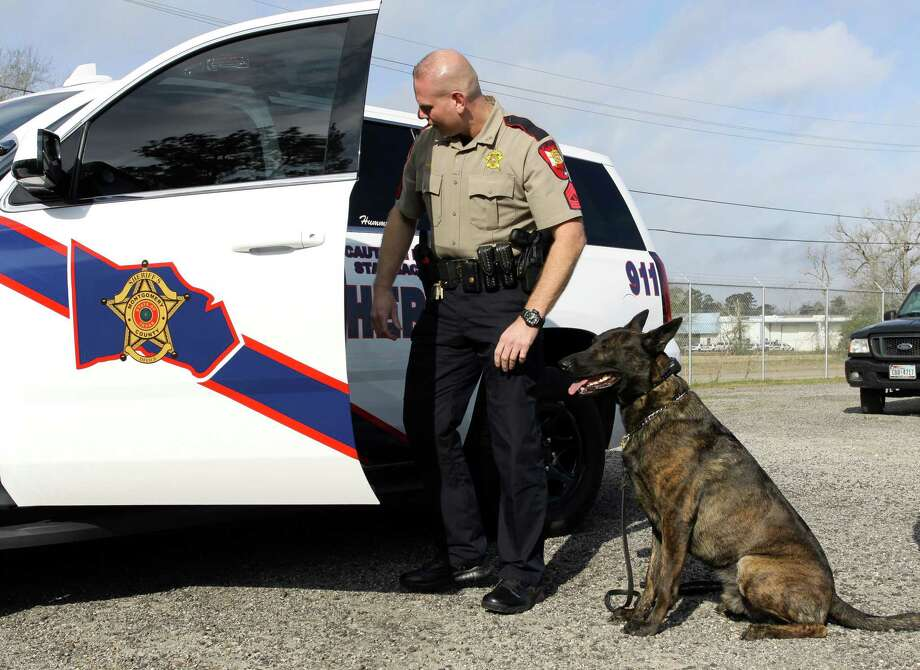 Montgomery County Sheriff's Office K9 Hummer waits for Sgt. David Birch to give him a command at the Montgomery County Sheriff's Office Regional Training Center Wednesday, Feb. 1, 2017, in Conroe. Photo: Catherine Dominguez, Staff Photographer / © 2017 Houston Chronicle