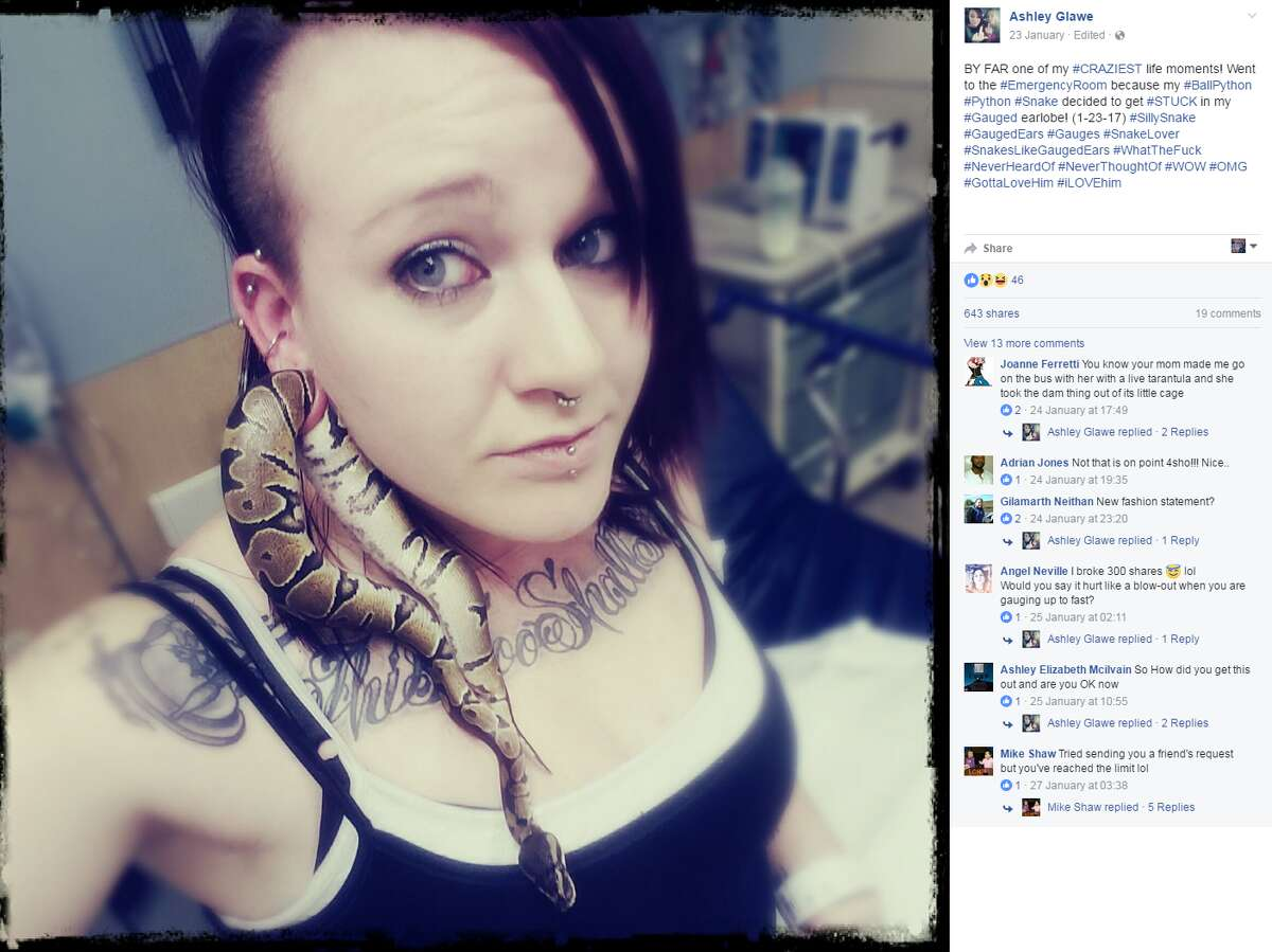 Texas snakes A Portland woman recently went to the emergency roof after her pet snake got stuck in her earlobe. Click through to see facts about Texas snakes.