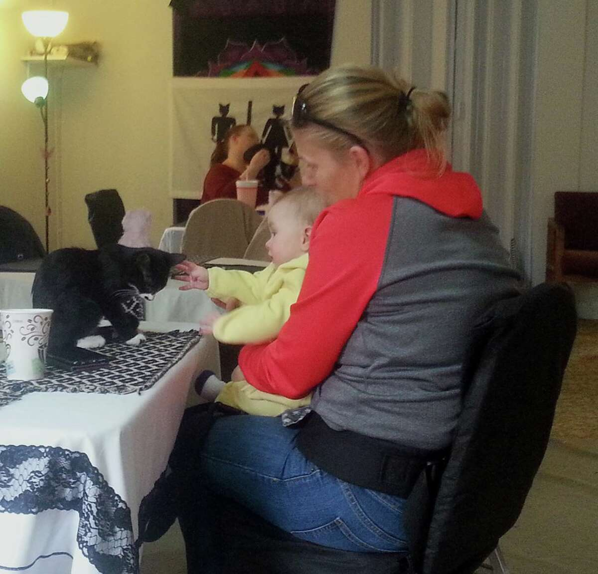 Operation Pets Alive created The Great Catsby to aid in the adoption of older cats who often have a difficult time finding a forever home. The next pop-up cat cafe will be on Feb. 11 and 12 from noon to 5 p.m. in Old Town Spring.