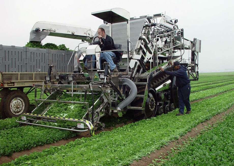 Sources of farm labor are becoming increasingly unreliable and costly, especially with illegal immigration likely to face a crackdown in the Trump administration. That's forcing more growers to invest in machines that reduce human involvement in the production cycle. Here, a mechanical lettuce harvester is being tested on a field near El Centro, Calif. Photo: Ramsay Highlander Inc. / RAMSAY HIGHLANDER, INC.