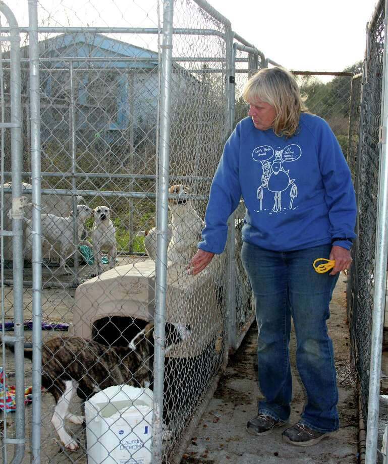 Margie Michalsky greets some of the dogs under her care at Puppy Dogs R Us in Dayton. She is working to make improvements to the shelter in the wake of an SPCA raid that seized the 150 animals before a judge ordered the animals had to be returned. Photo: Vanesa Brashier