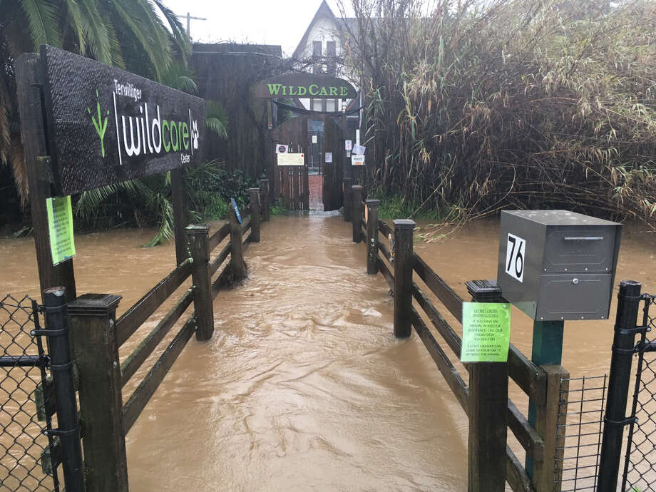 Swollen San Rafael Creek covers the bridge entrance to the Wildcare Animal Center. Photo: William Disbrow
