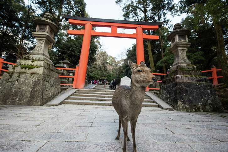 Deer are recognized as the messenger of gods, so they walk everywhere at the Kasuga-shrine in Nara, Japan. MUST CREDIT: Photo for The Washington Post by Takahiro Bessho.