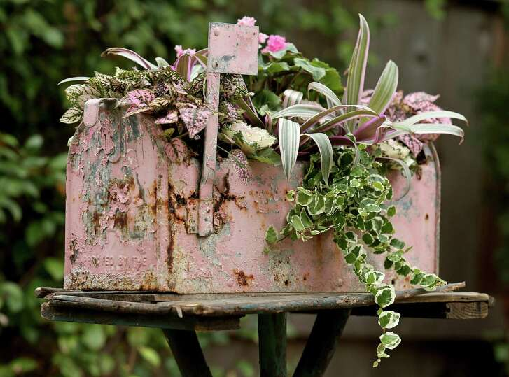 Love Letters: A repurposed rusty, metal mailbox — tin shears helped remove the top portion for planting — sends a message of love with pink polka dot plants, pink curly cyclamen, pink ornamental kale, pink hosta and variegated creeping fig vine. This example was crafted by freelancer John G. Bloodworth through his business Gathers No Moss.