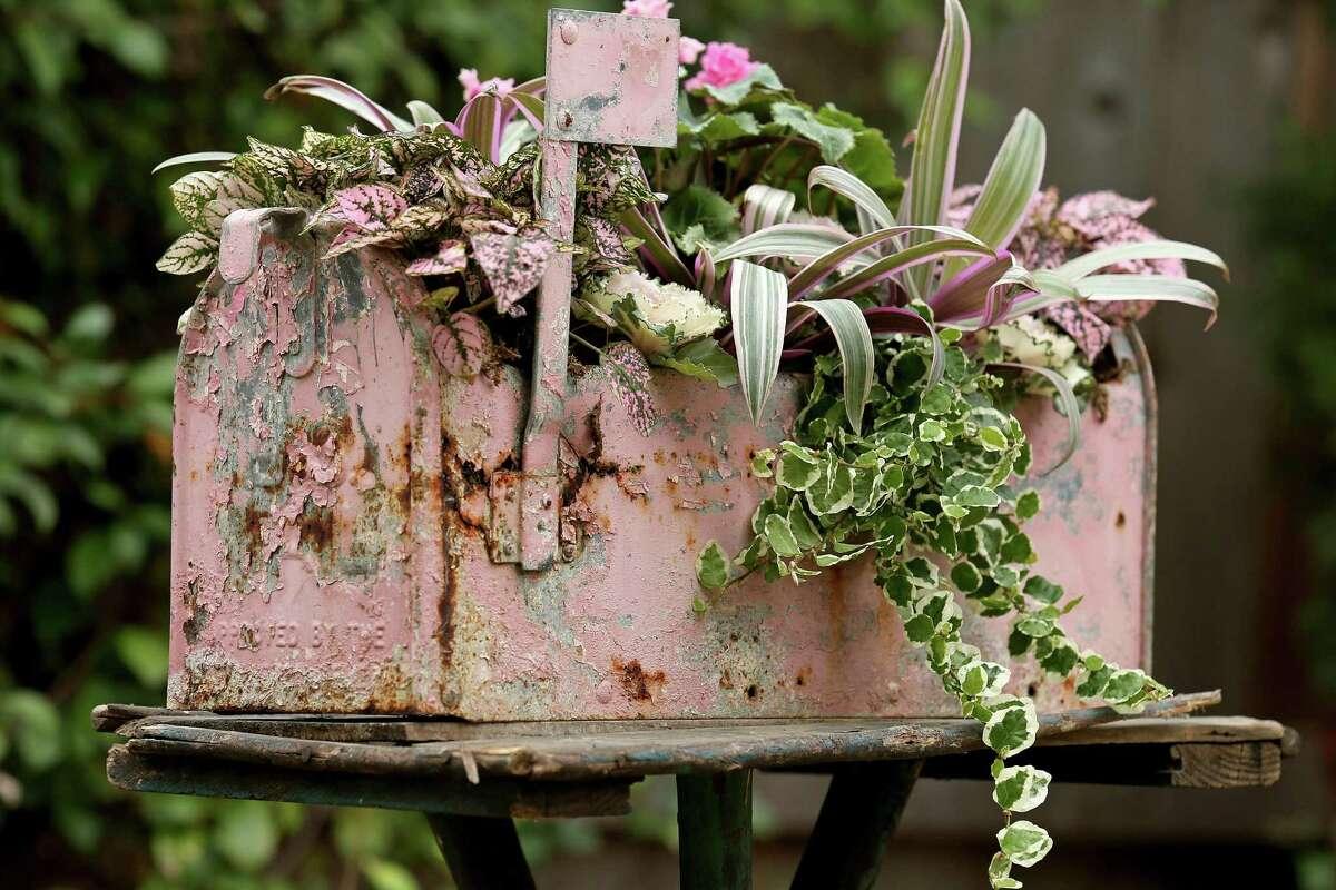Show your Valentine you dig \'em with potted flowers - ExpressNews.com