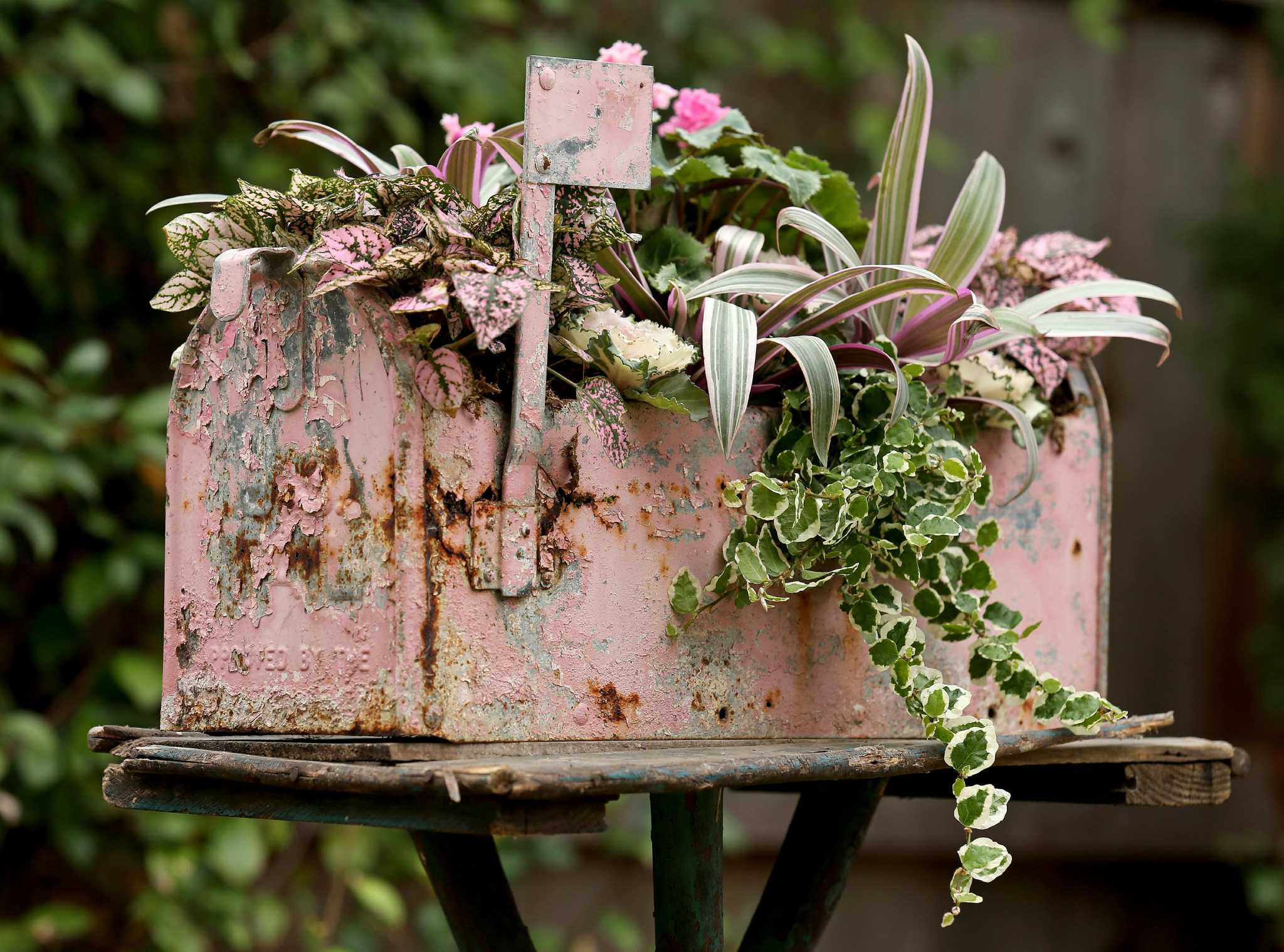 Show your Valentine you dig \'em with potted flowers - San Antonio ...