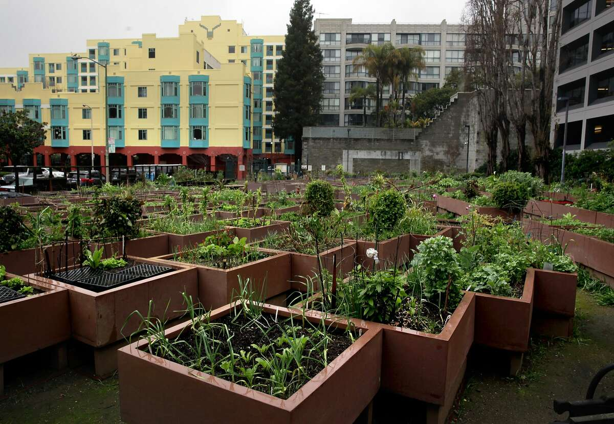 The Alice Street Community Garden is seen in downtown San Francisco, Ca. on Tuesday Feb. 7, 2017. Another community garden is set to be added to the list of nearly fifty, as the city prepares to open Geneva Community Garden.